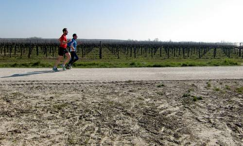 Cjaminade fra Amis - runners in the vineyards near Gonars, Italy (Copyright © 2015 Hendrik Böttger / runinternational.eu)