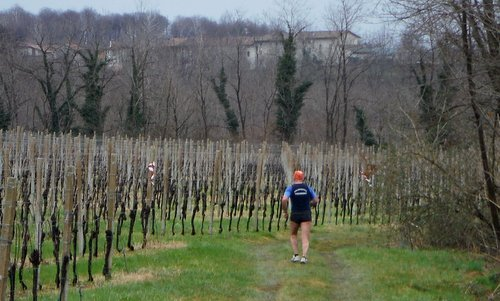 Cjaminade di San Josef - a runner in the vineyards near Laipacco di Tricesimo, Italy (Copyright © 2017 Hendrik Böttger / runinternational.eu)